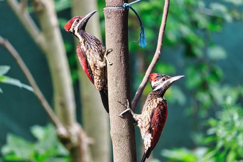red and brown bird on brown tree branch