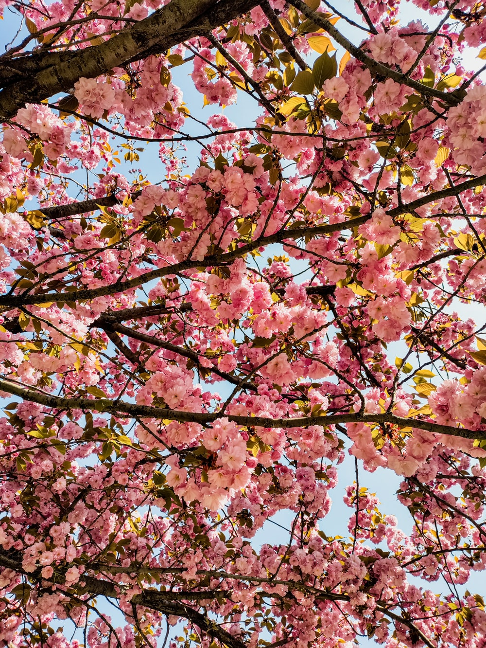 pink and yellow leaves tree