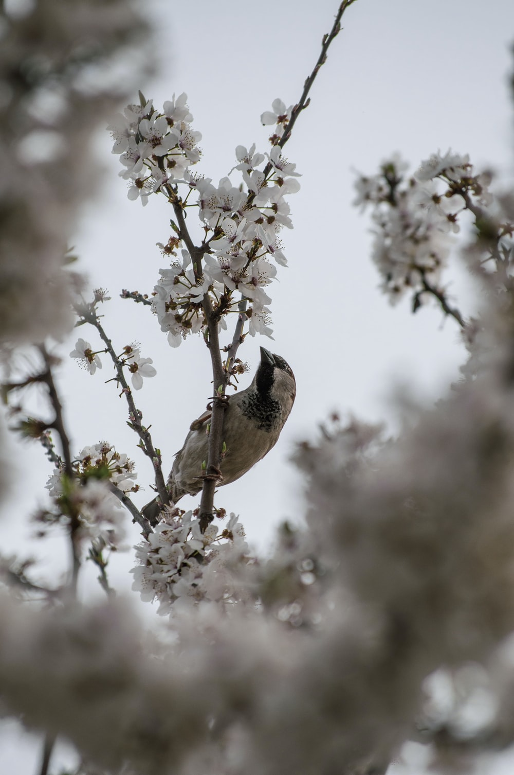 brown and white bird perched on white flower