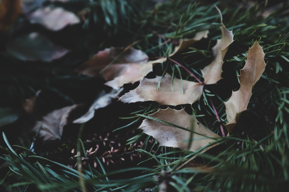 brown and white leaves on green grass