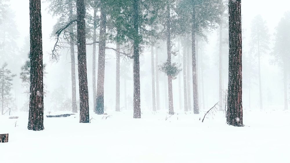 trees covered with snow during daytime