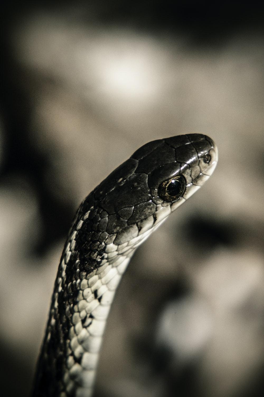 black and brown snake in tilt shift lens