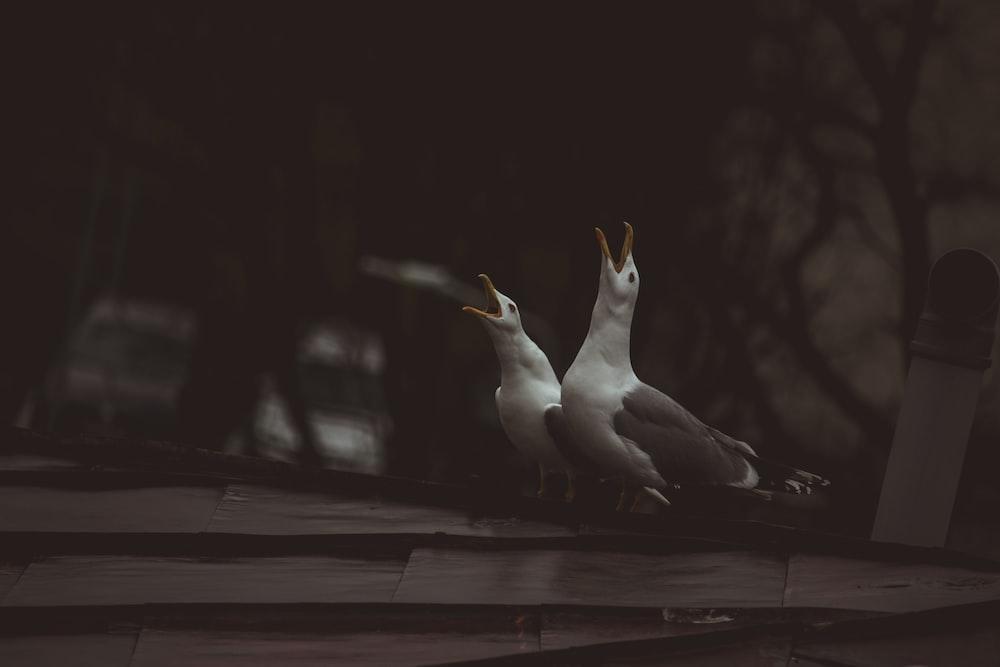 white bird on brown wooden surface