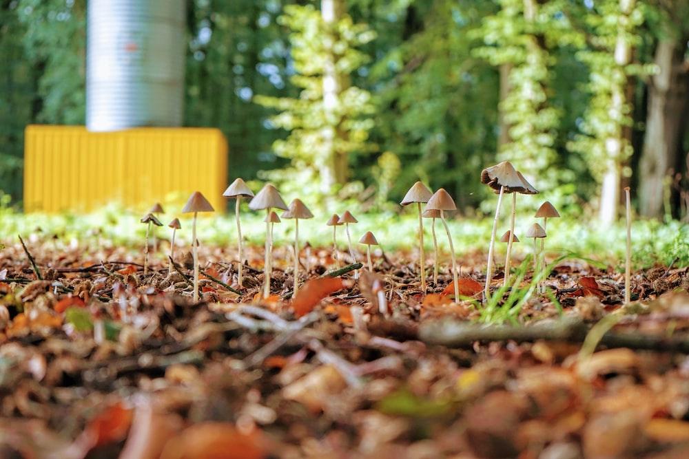 brown and white mushroom on ground