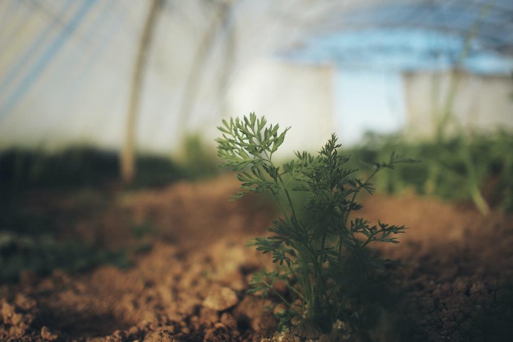 green plant on brown soil