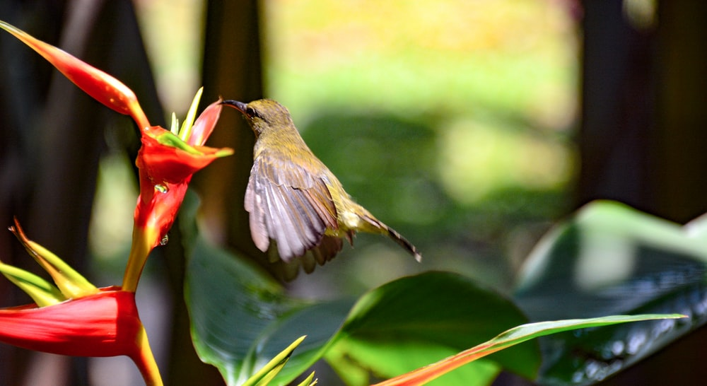 brown and red bird on green leaf