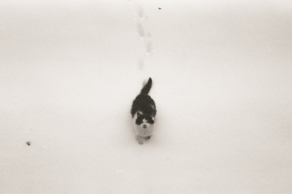 black and white cat on white snow