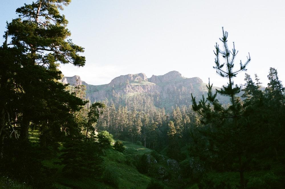 green trees near brown mountain during daytime