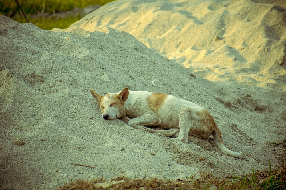 white and brown short coated dog on gray sand during daytime