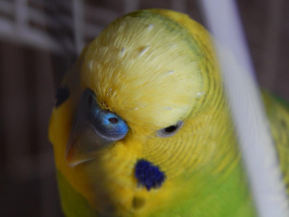 yellow bird on white cage