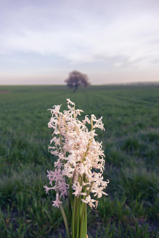 white flower on green grass field during daytime