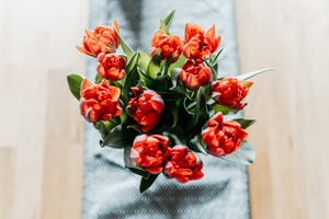 red roses on white textile