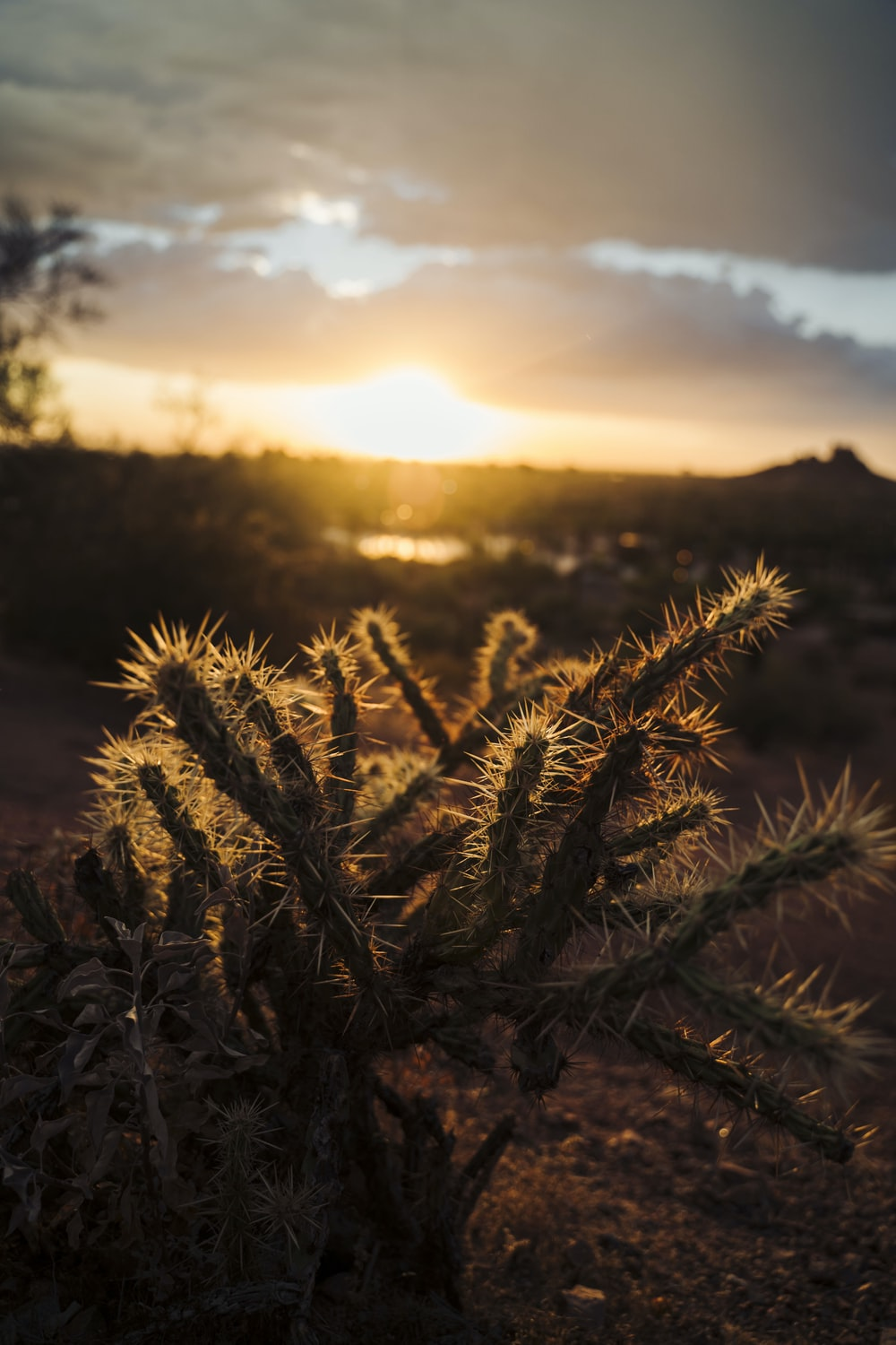brown plant on brown field during sunset