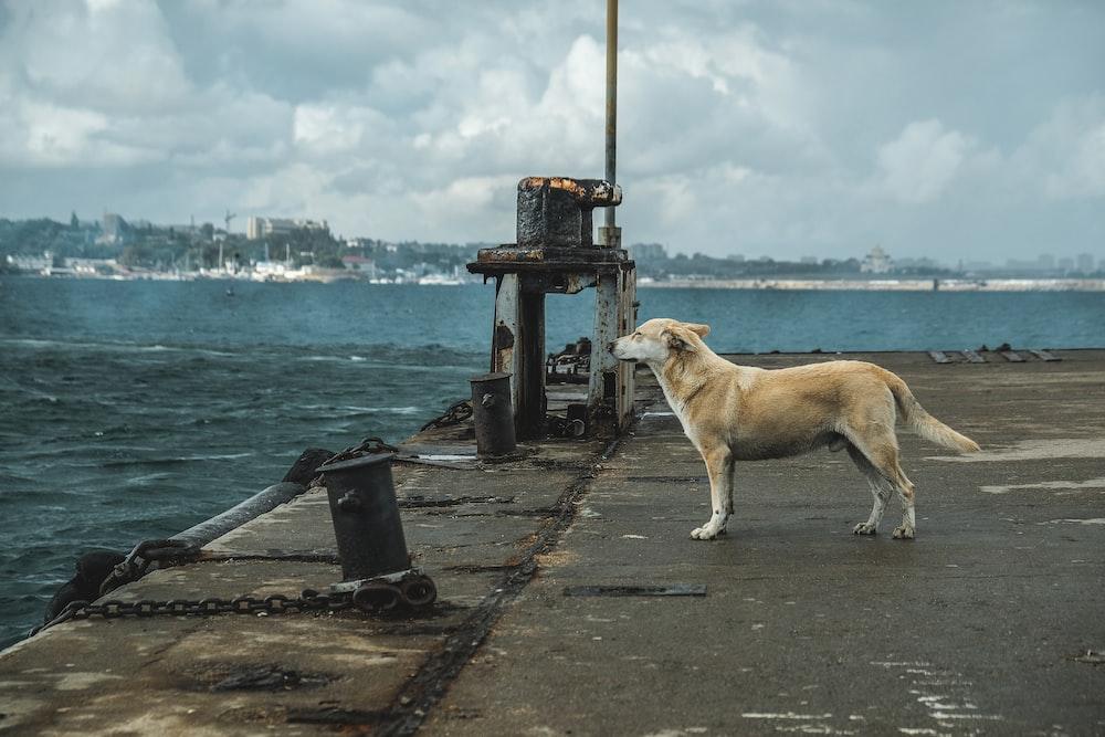 Nmn Supplement Nmn Supplement for dog dog supplement