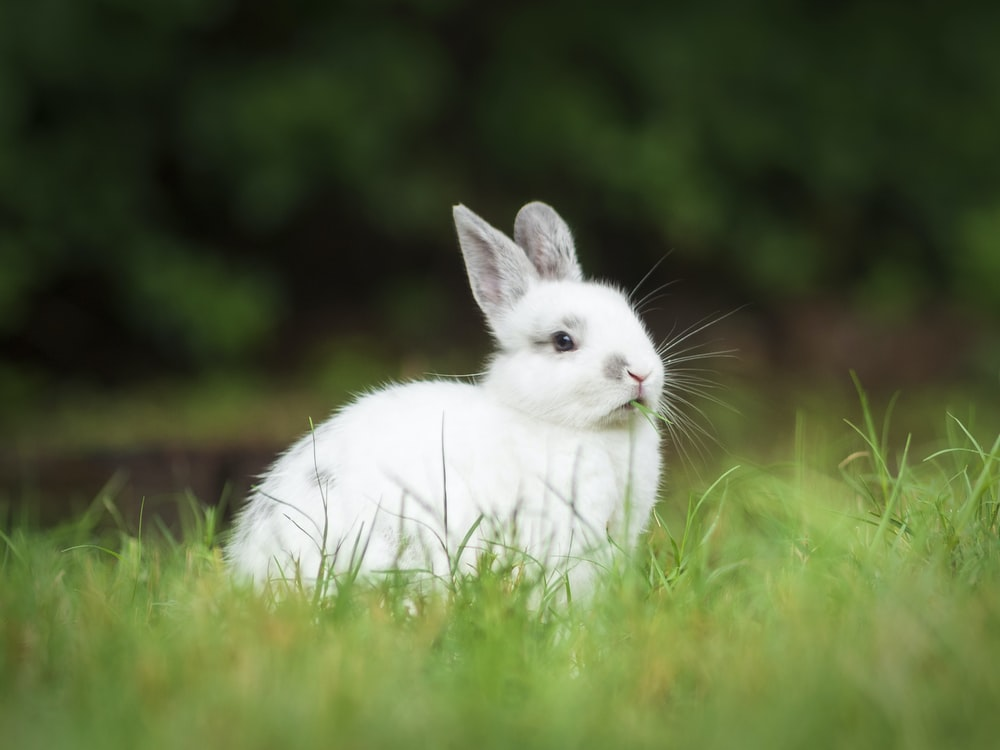 white rabbit on green grass during daytime