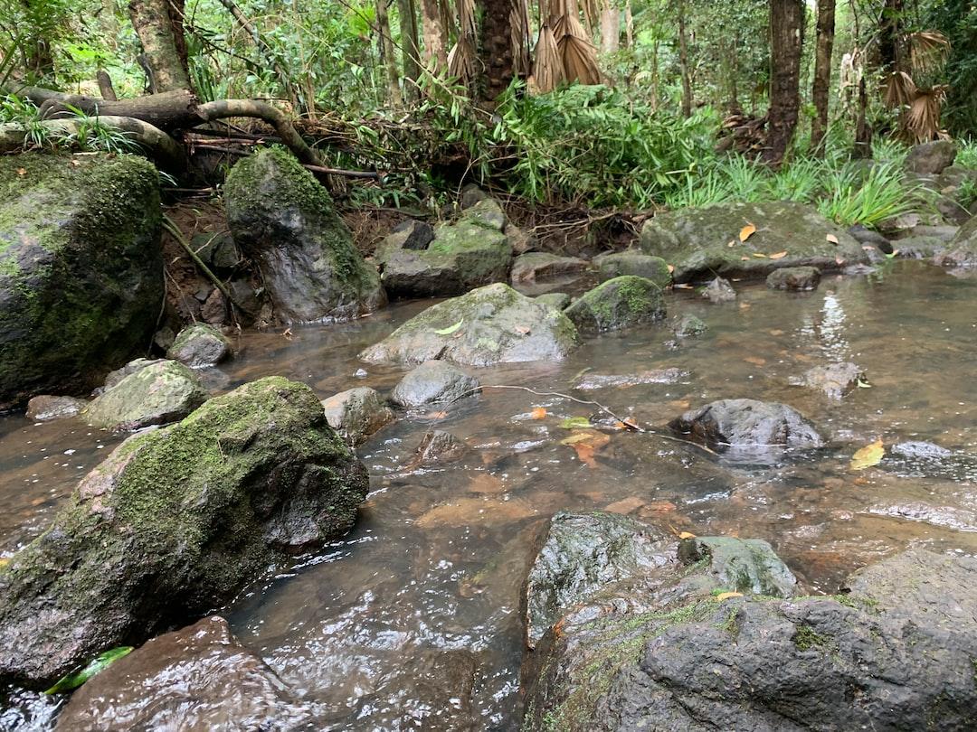 rainforest-stream ... photo