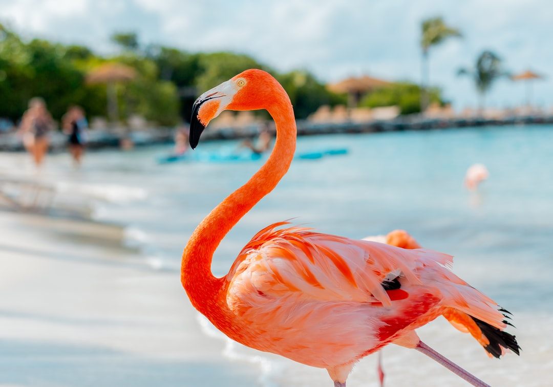 Jamaica Adults Only Vacation