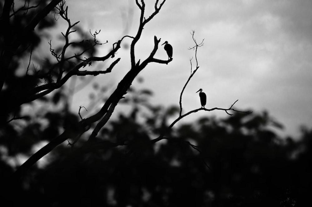 silhouette of bird on tree branch