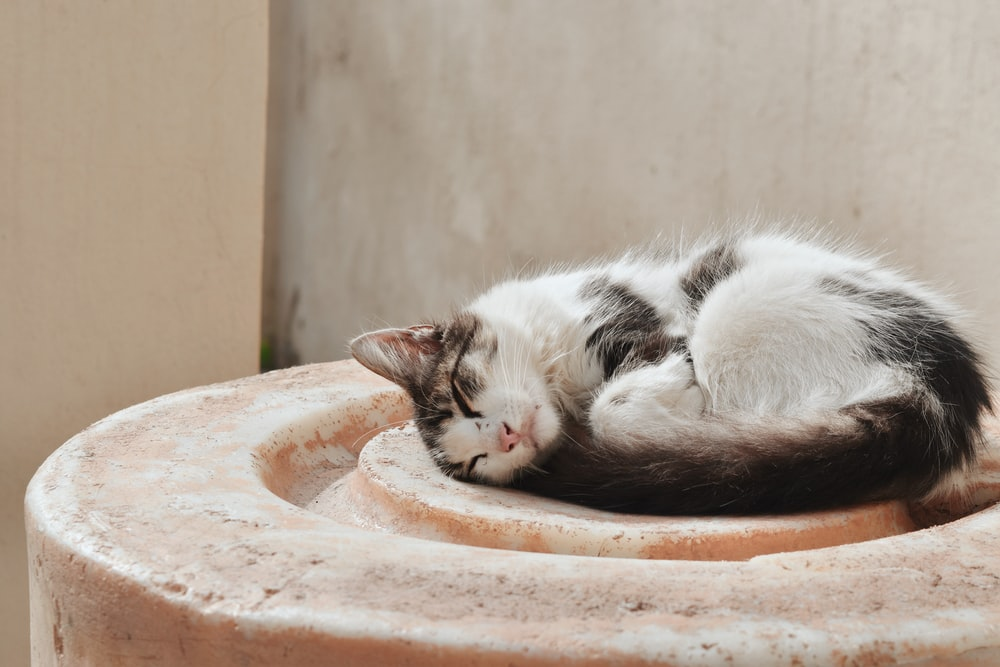 white and black cat lying on brown concrete round table