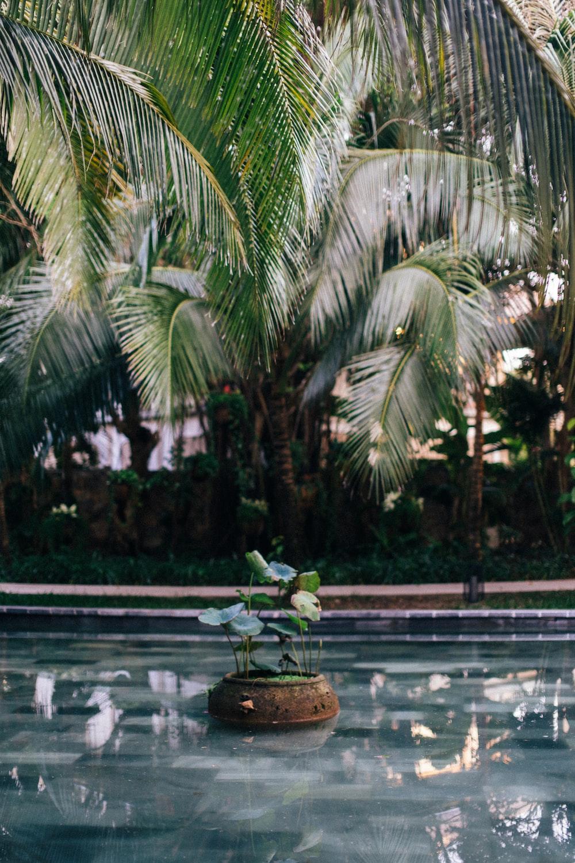 green palm tree near swimming pool during daytime