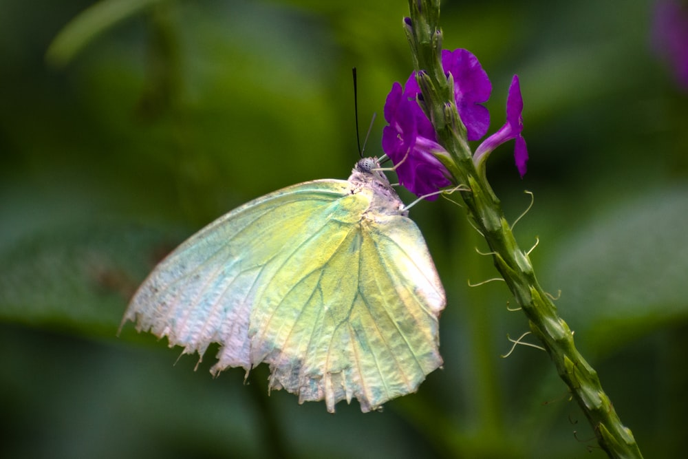 white and green butterfly perched on purple flower in close up photography during daytime