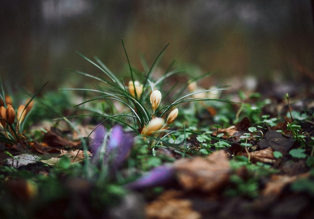 purple flower on brown dried leaves