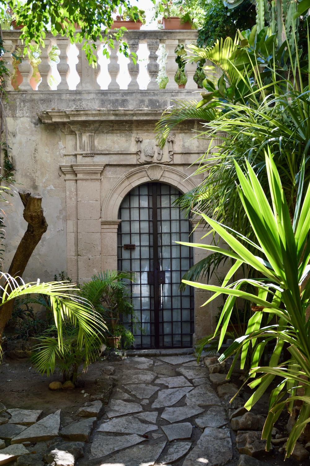 green palm plant near brown wooden door