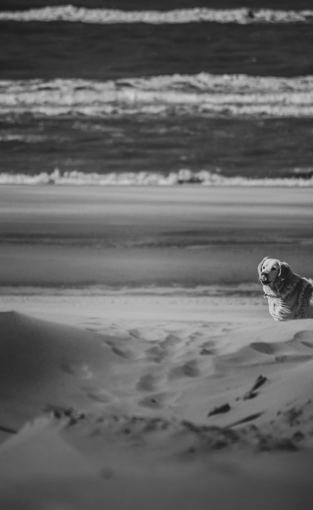 grayscale photo of dog on sand
