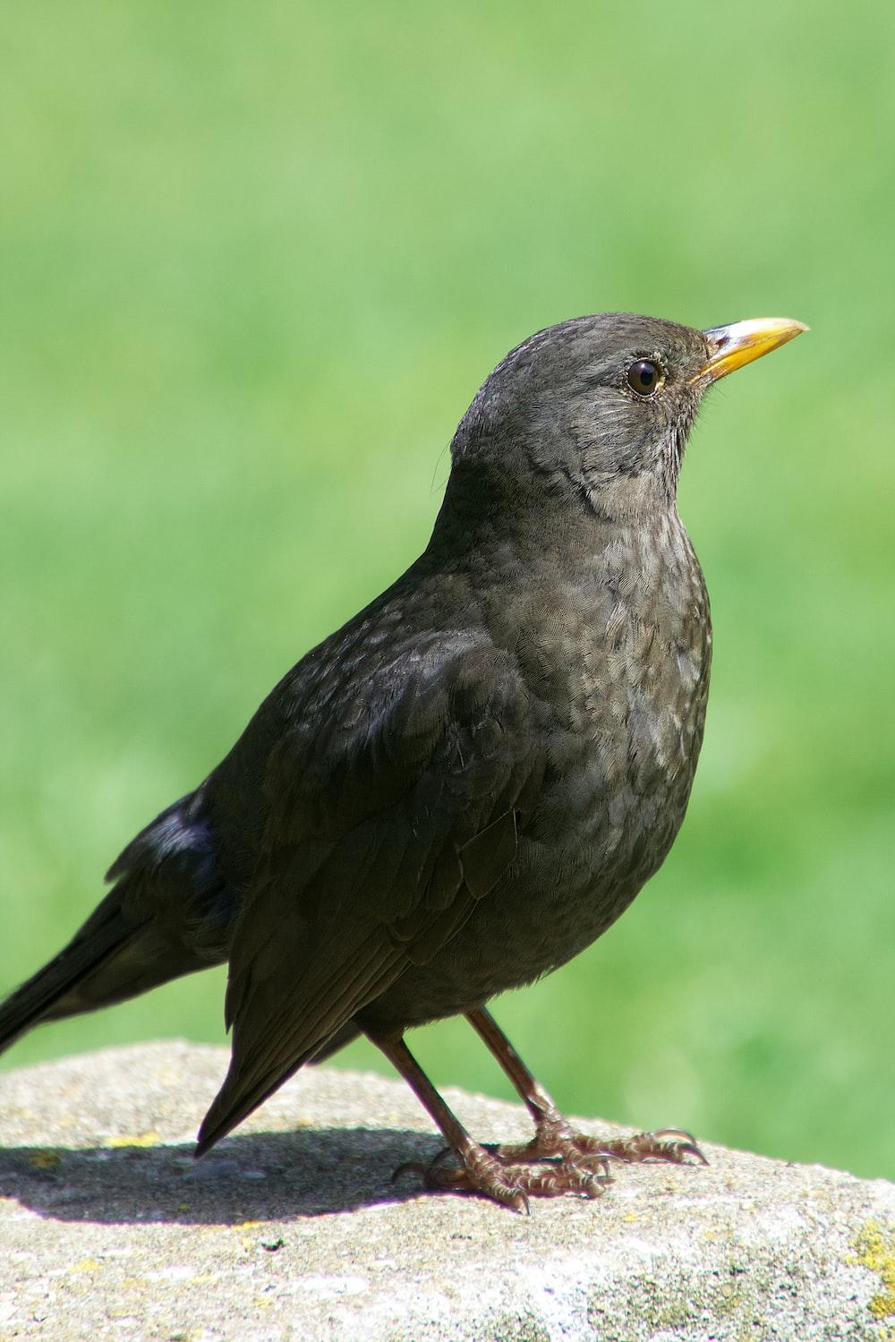 black bird on brown wooden stick during daytime