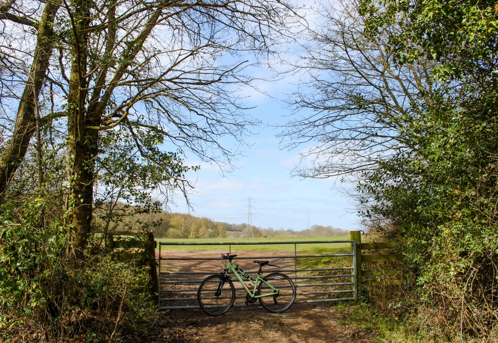 black bicycle on green grass field near bare trees during daytime