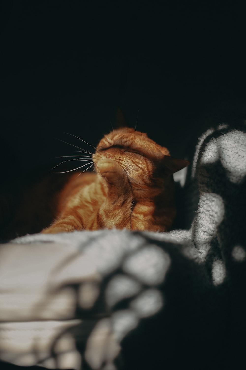 orange tabby cat lying on gray textile