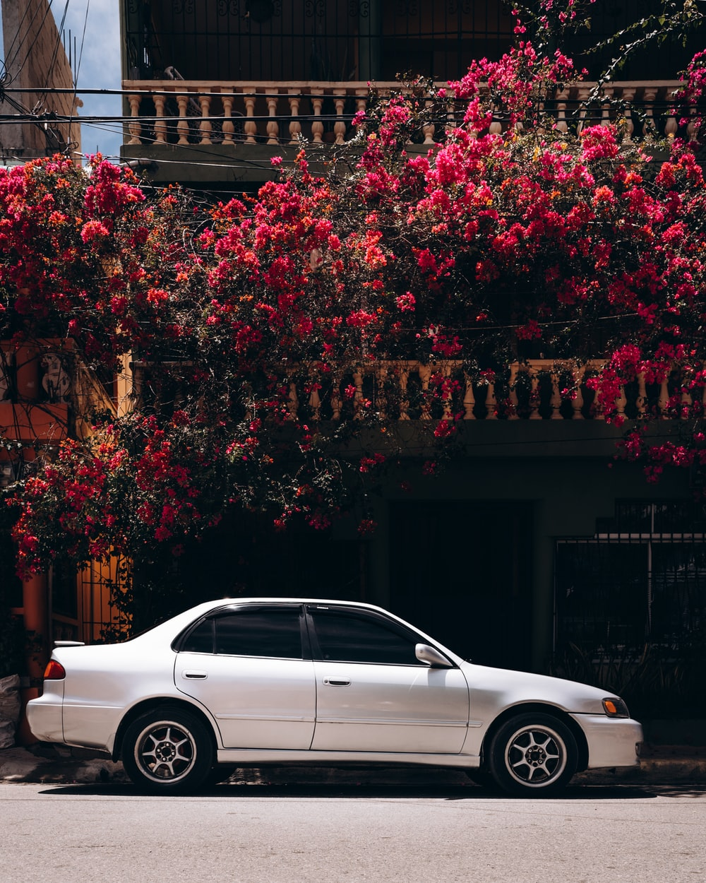 white sedan parked beside red leaf tree