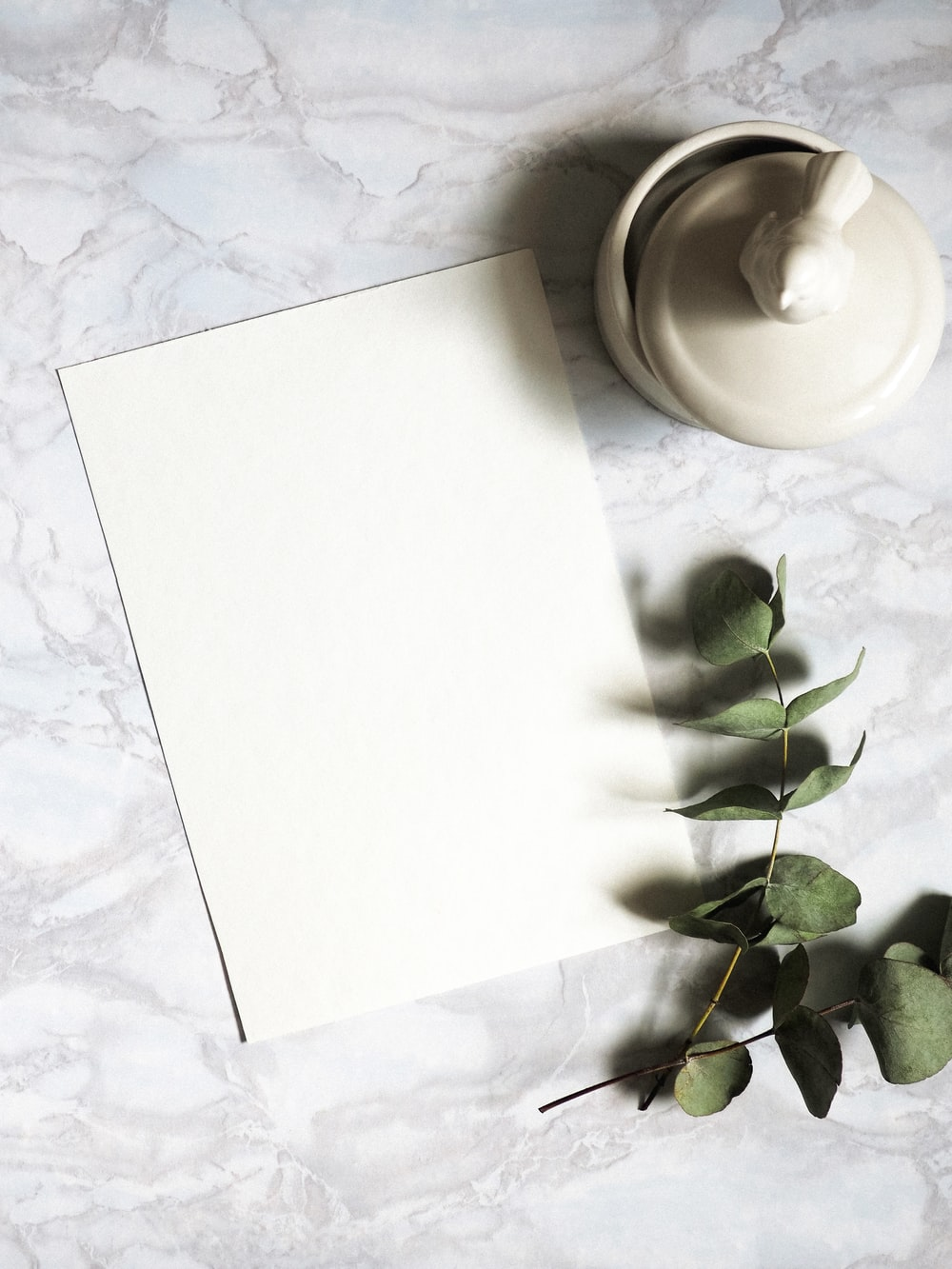 white paper beside green plant