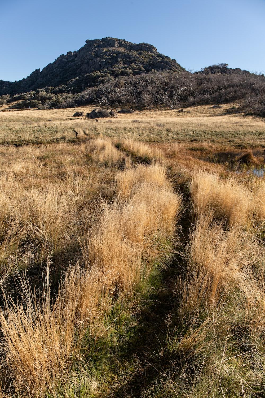 brown grass field near mountain during daytime