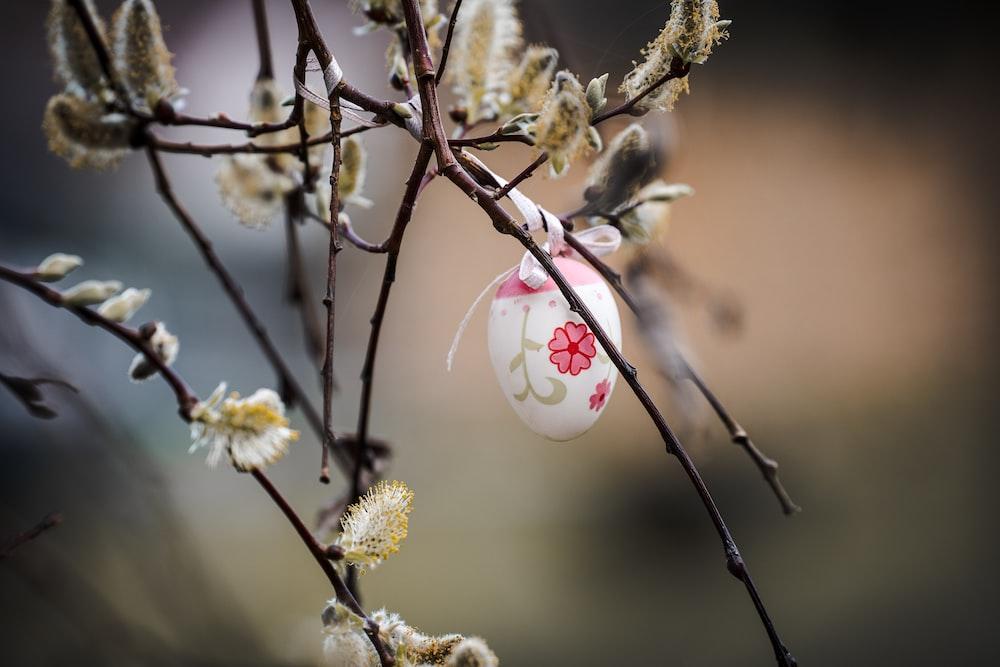 white and pink flower buds in tilt shift lens