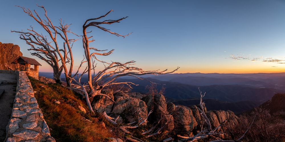 bare tree on brown mountain during daytime