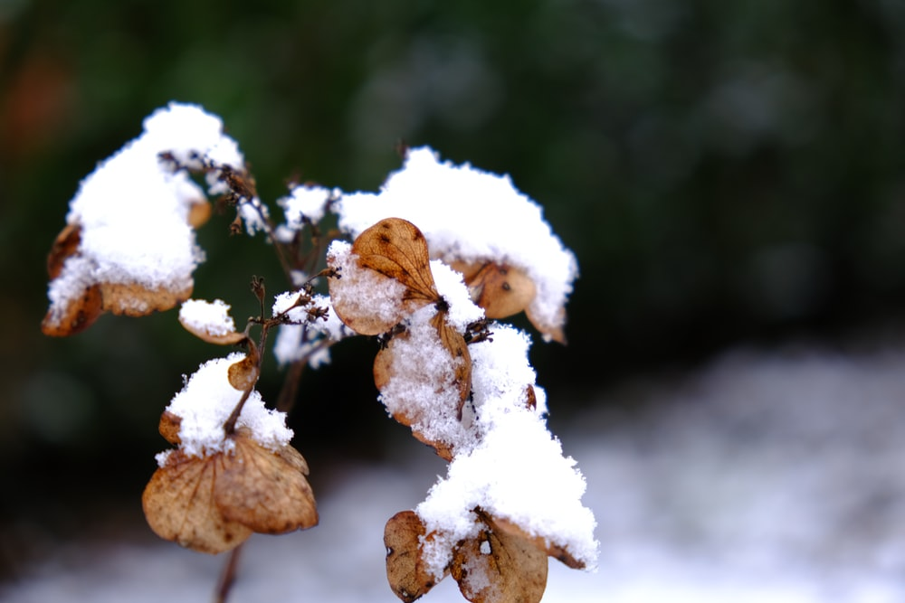 white and brown plant covered with snow