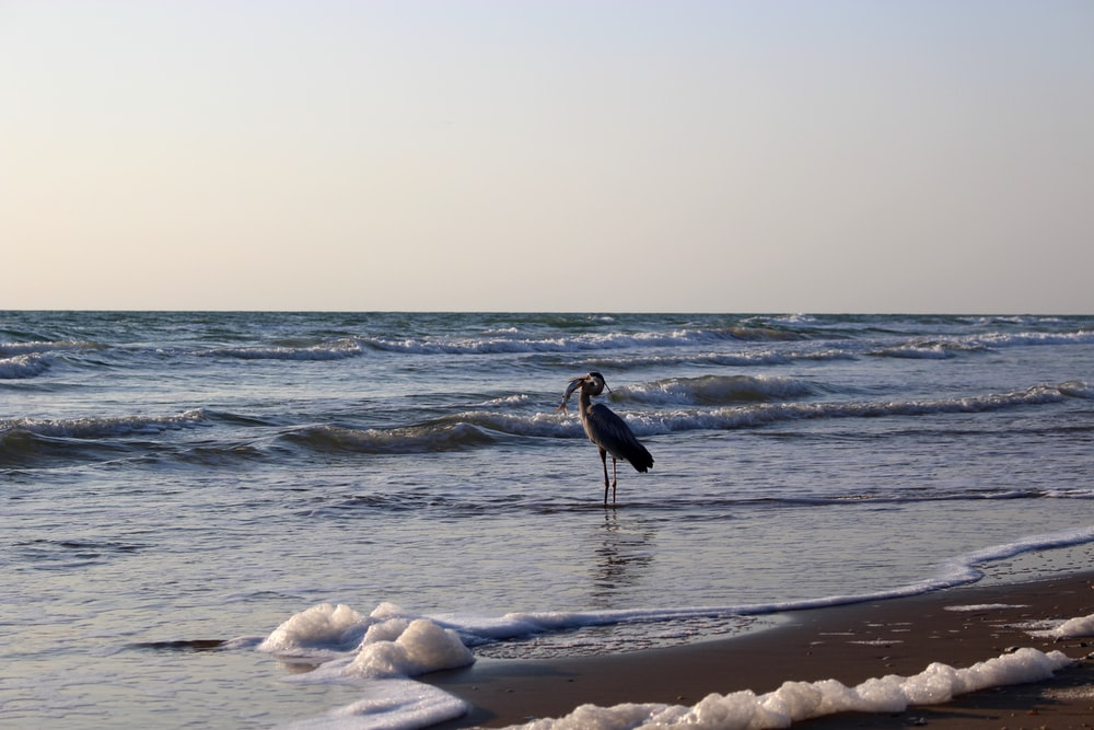 black and white bird on beach shore during daytime