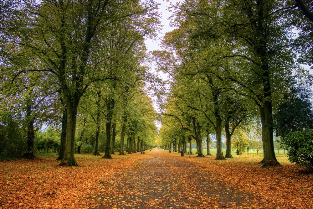 brown dried leaves on ground with green trees