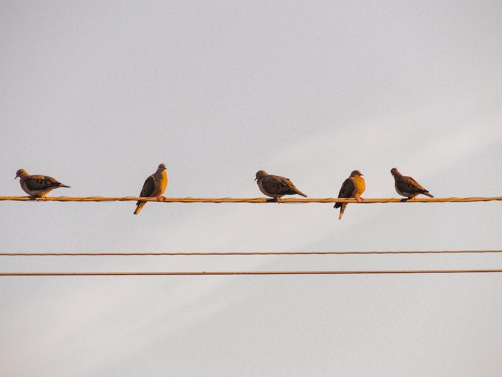 three birds on wire during daytime
