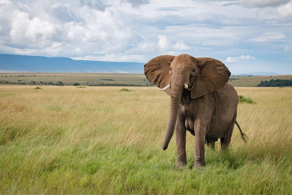 brown elephant on green grass field under white clouds and blue sky during daytime