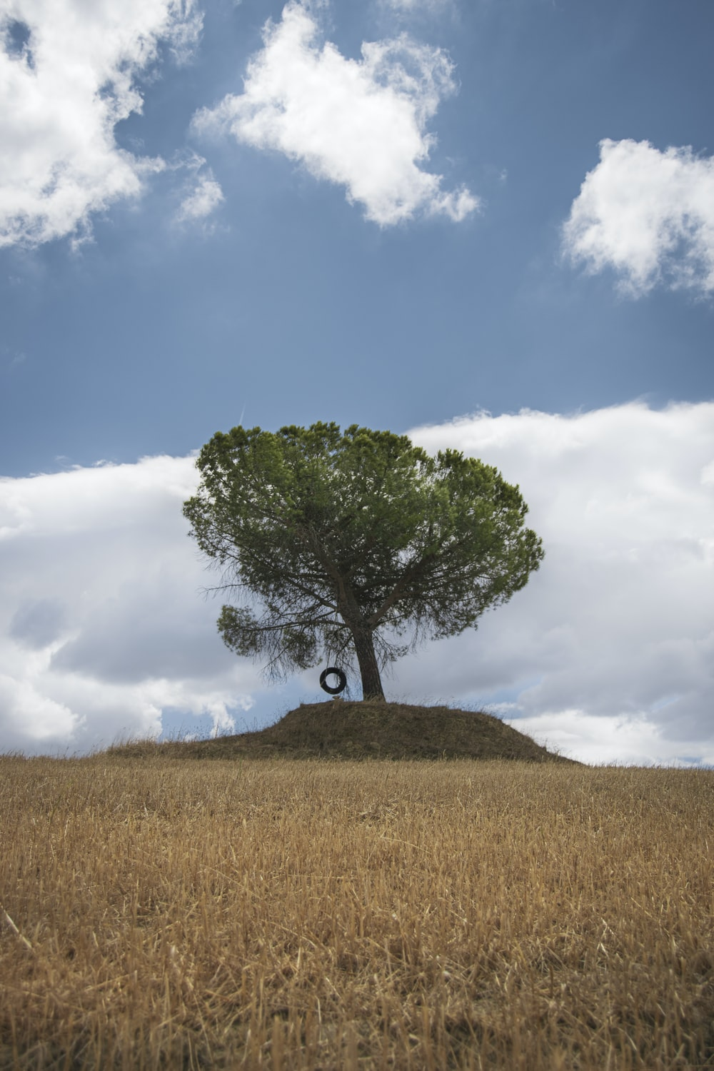 green tree on brown grass field under white clouds and blue sky during daytime