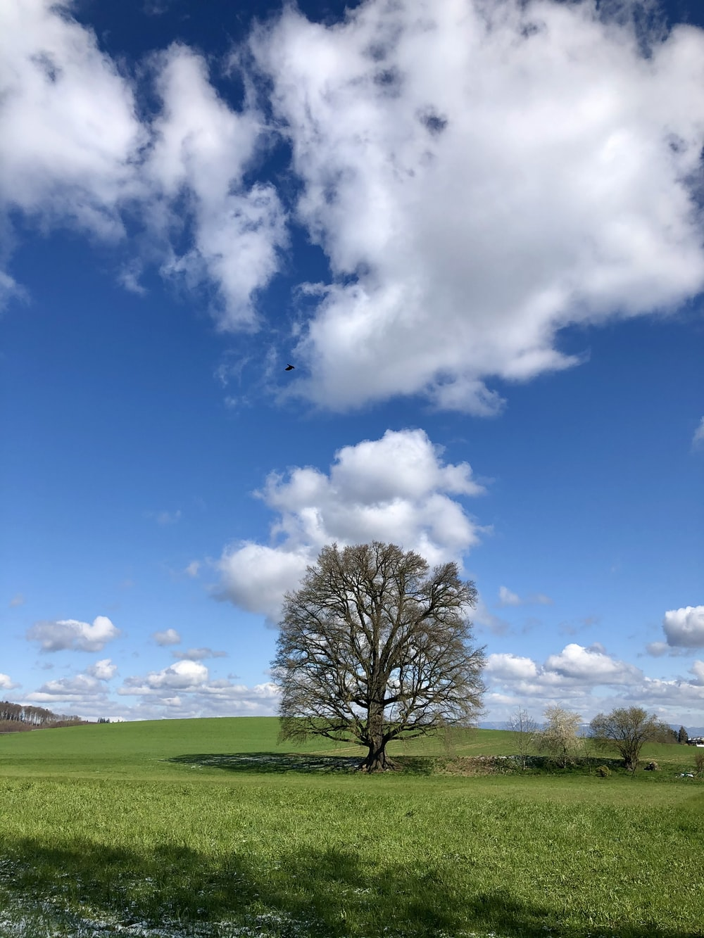 leafless tree on green grass field under blue and white cloudy sky during daytime
