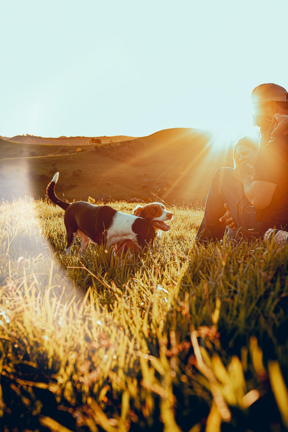 man and woman sitting on grass field during sunset