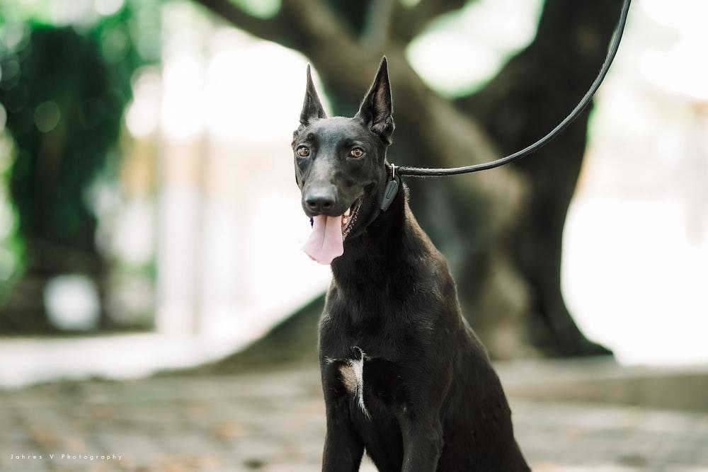 black short coat medium dog on road during daytime