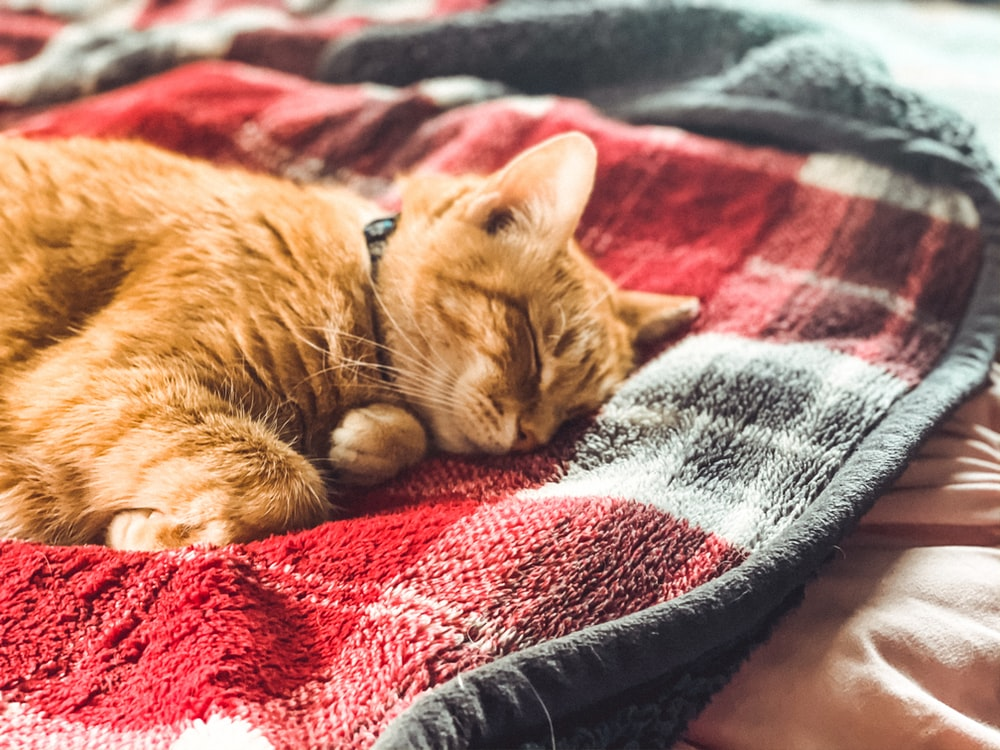 orange tabby cat lying on blue and red textile