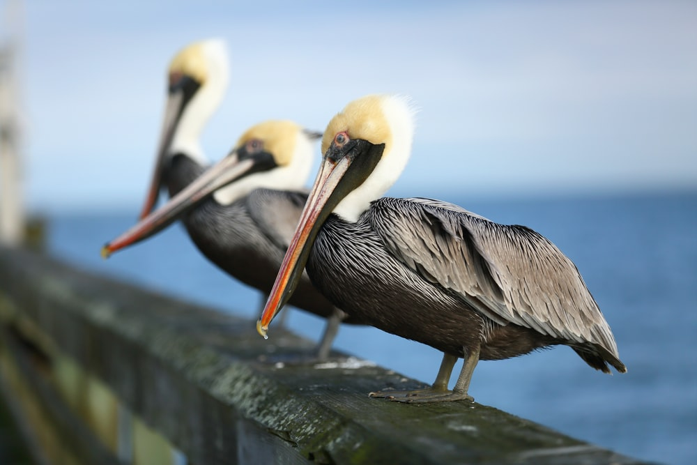 pelican on gray concrete wall during daytime