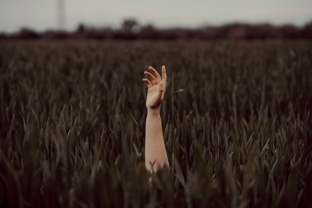 persons hand on green grass field