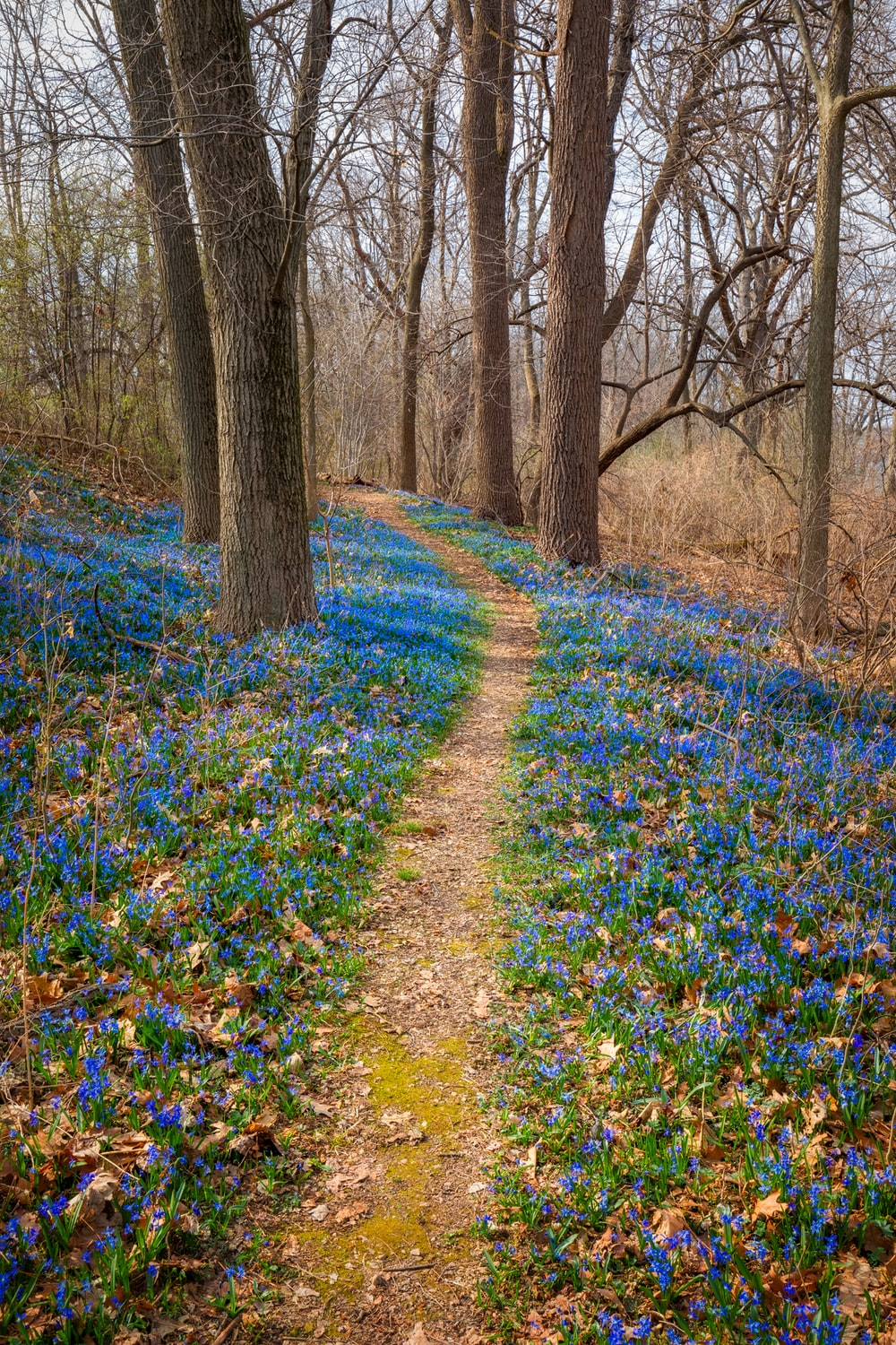 blue flowers on the ground
