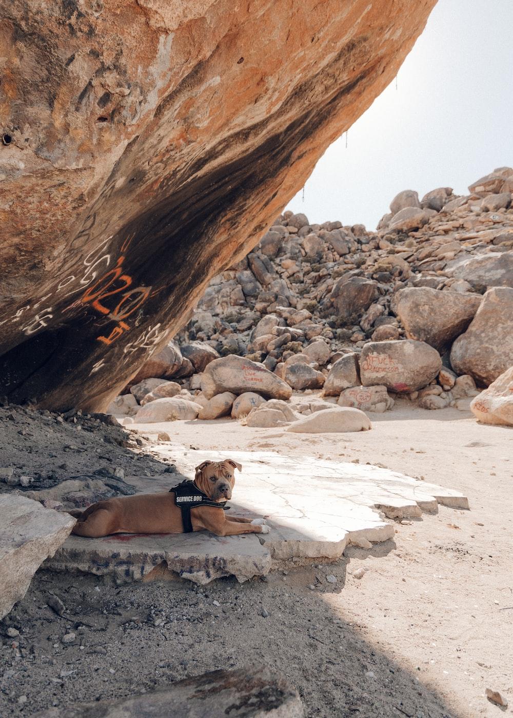 man in black shorts sitting on rock near brown rock formation during daytime